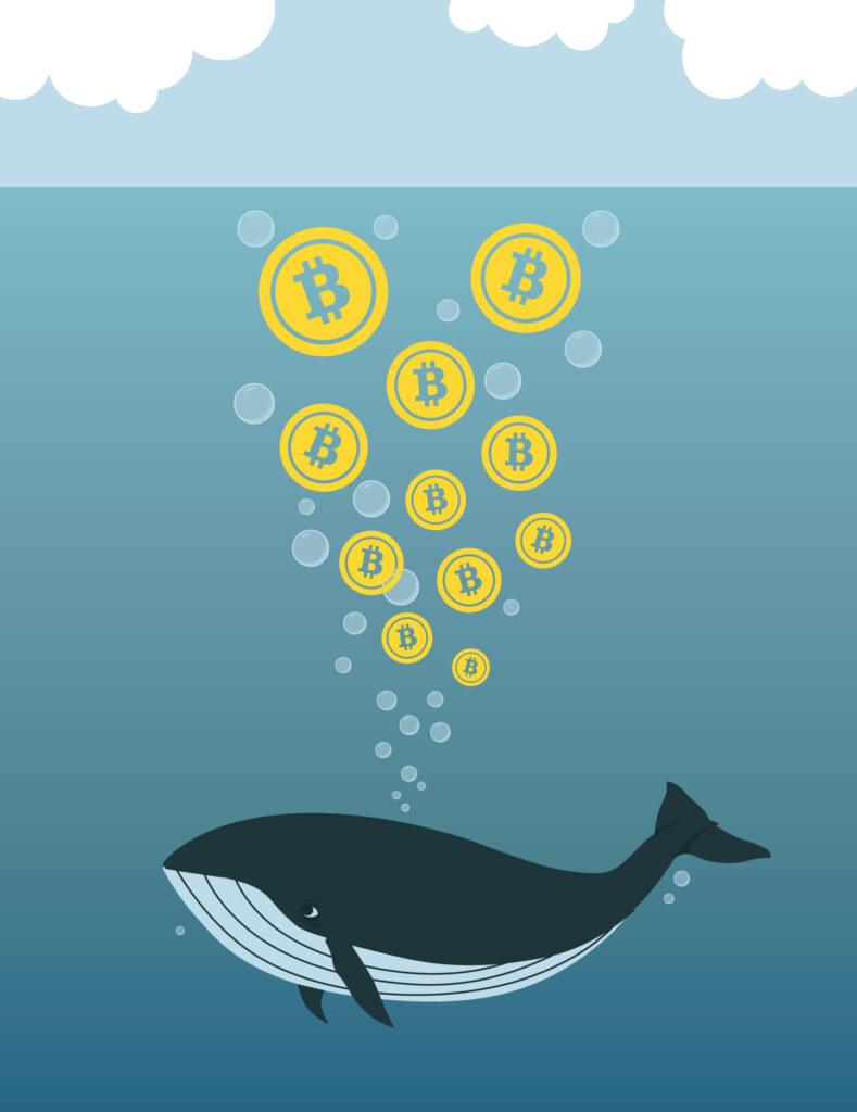 Wat is een Bitcoin whale